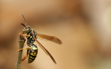 Andrew Buckman's Photo of a Wasp